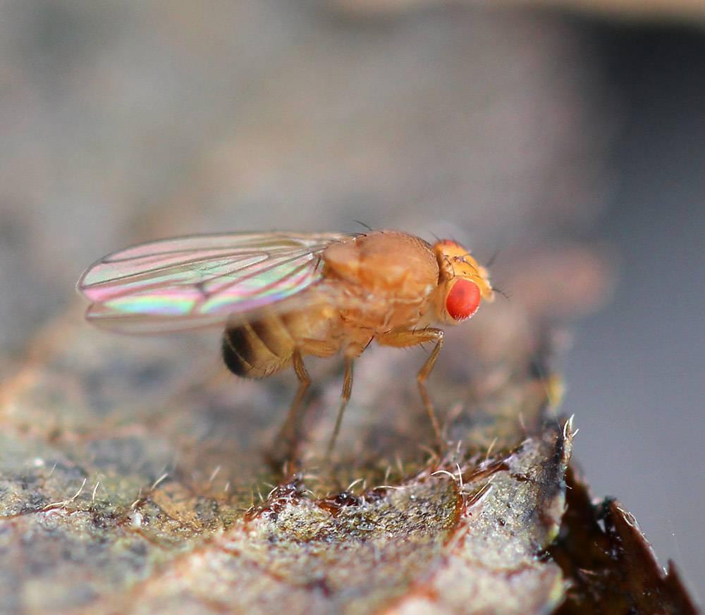 Почему в доме появляются мухи