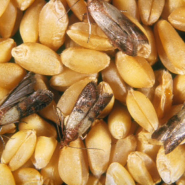 Пищевая моль на продуктах питания