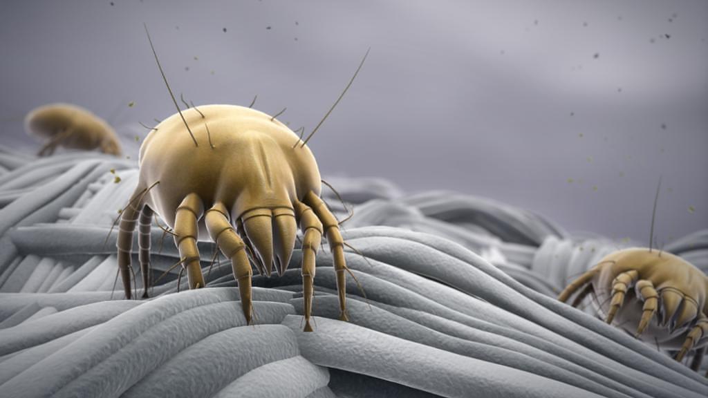 Постельные клещи укусы, фото , как выглядят