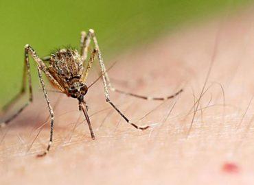 Укус комара, фото