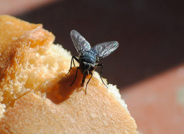 Муха на хлебе