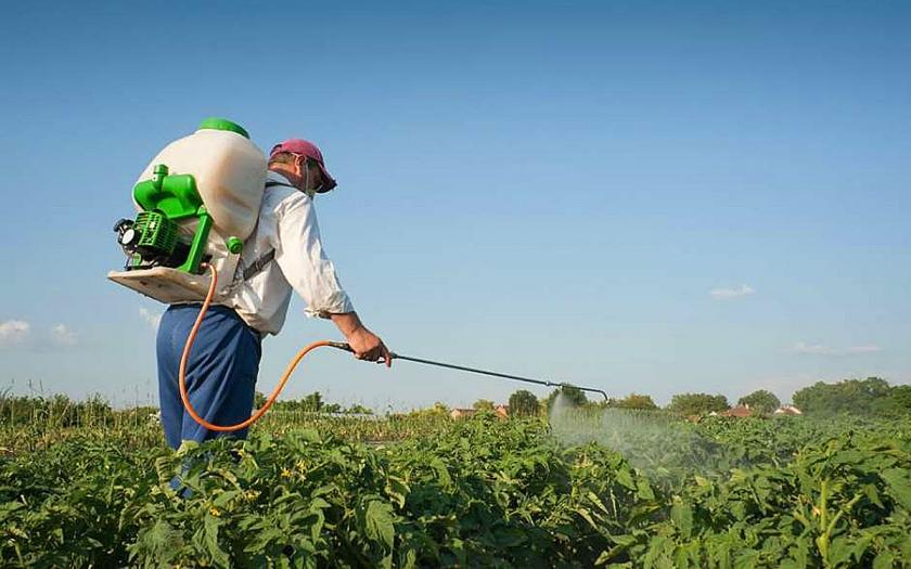 Опрыскивание колорадского жука на картофеле