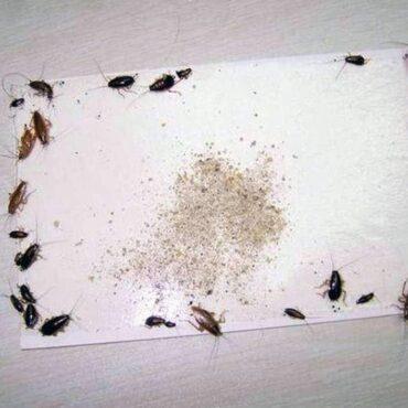 Самодельная ловушка для рыжих тараканов
