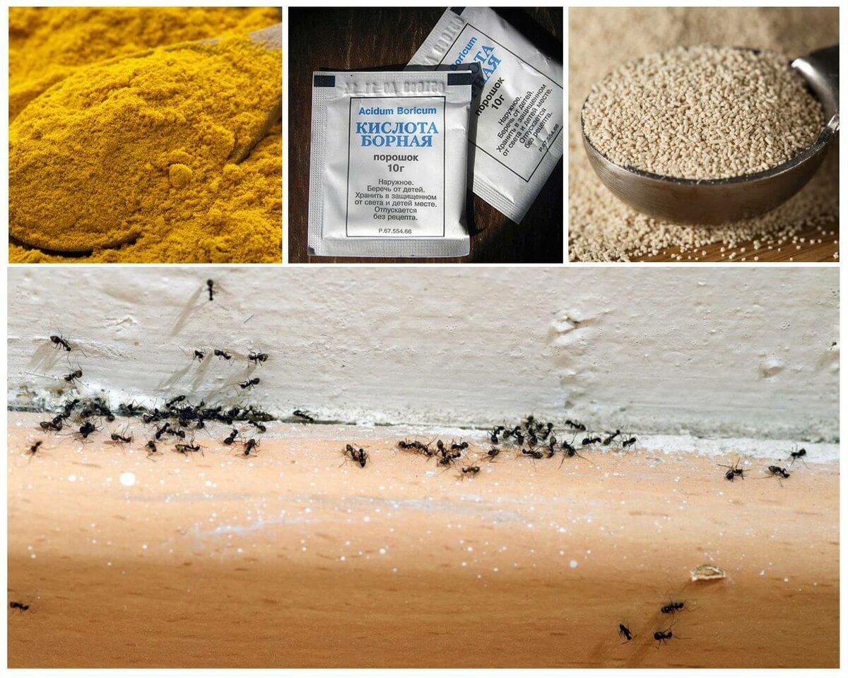 Народные способы борьбы с муравьями