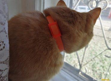 Ошейник от клещей для кошек, фото