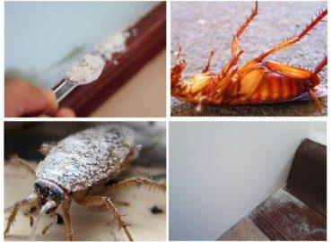 Порошки от тараканов, правила применения