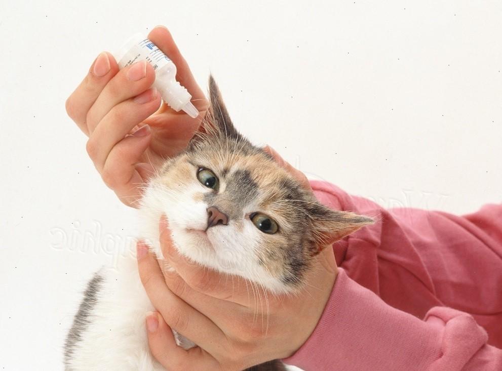 Ушной клещ у кошек: лечение каплями