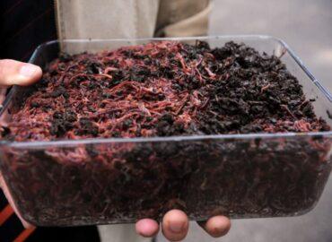 Вермикультура: разведение земляных червей в домашних условиях