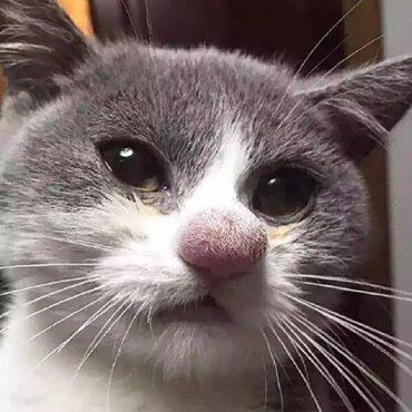 Кошку укусила оса