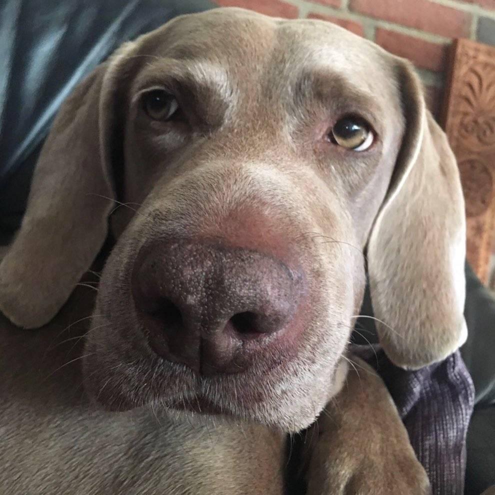 Что делать, если собаку укусила оса?